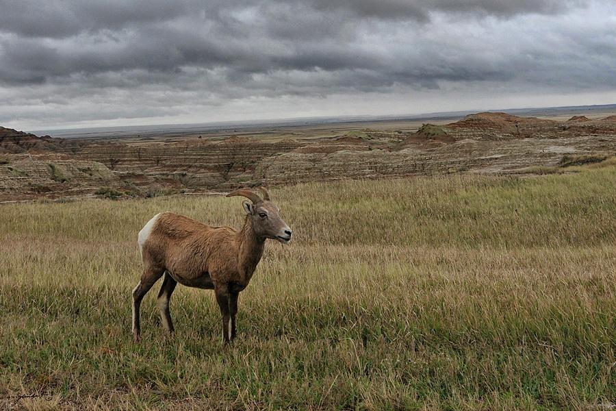Grasslands South Dakota United States of America by Gerlinde Keating - Galleria GK Keating Associates Inc
