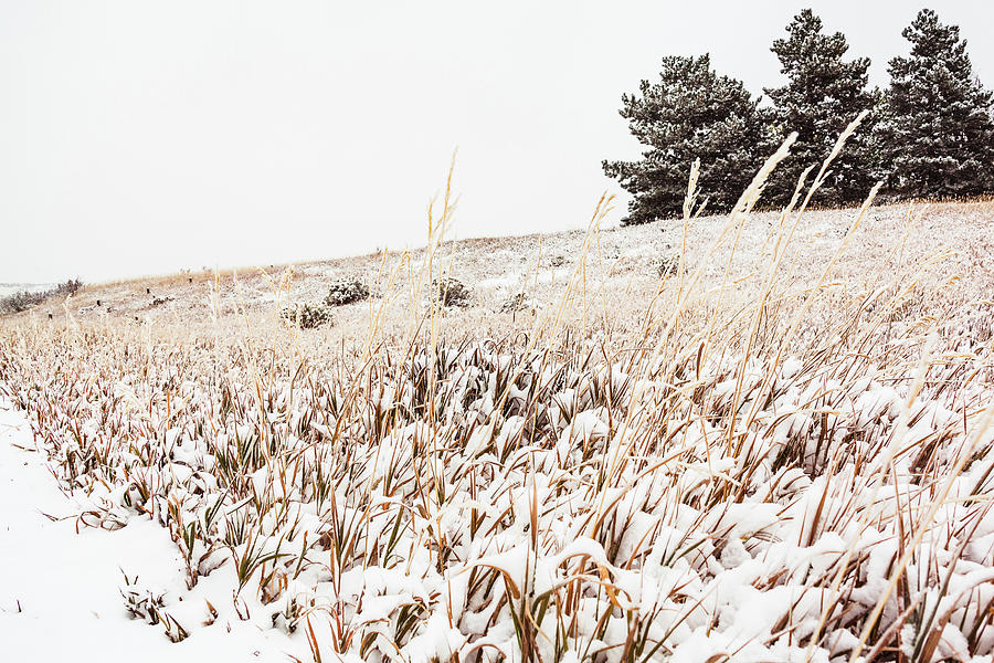 Grassy Hill Covered In Snow by Jeanette Fellows