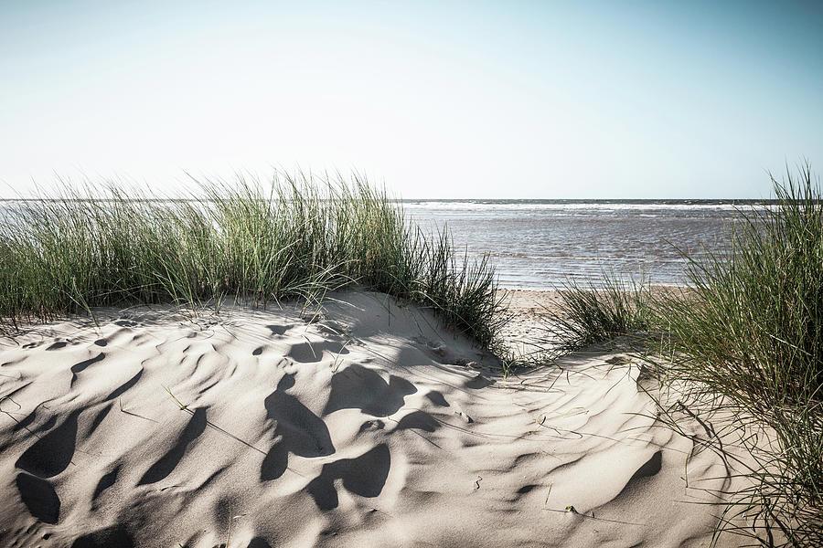 Grassy Sand Dunes On Beach by Dan Brownsword