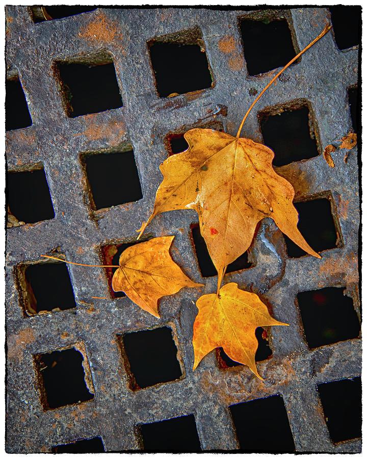 Grateful Leaves  by Harriet Feagin