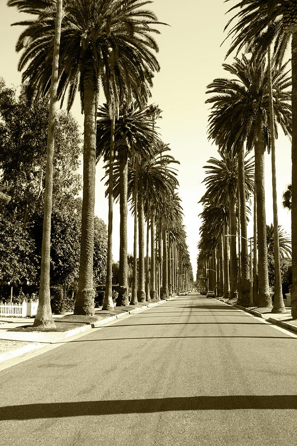 Grayscale Image Of Beverly Hills Photograph by Marcomarchi