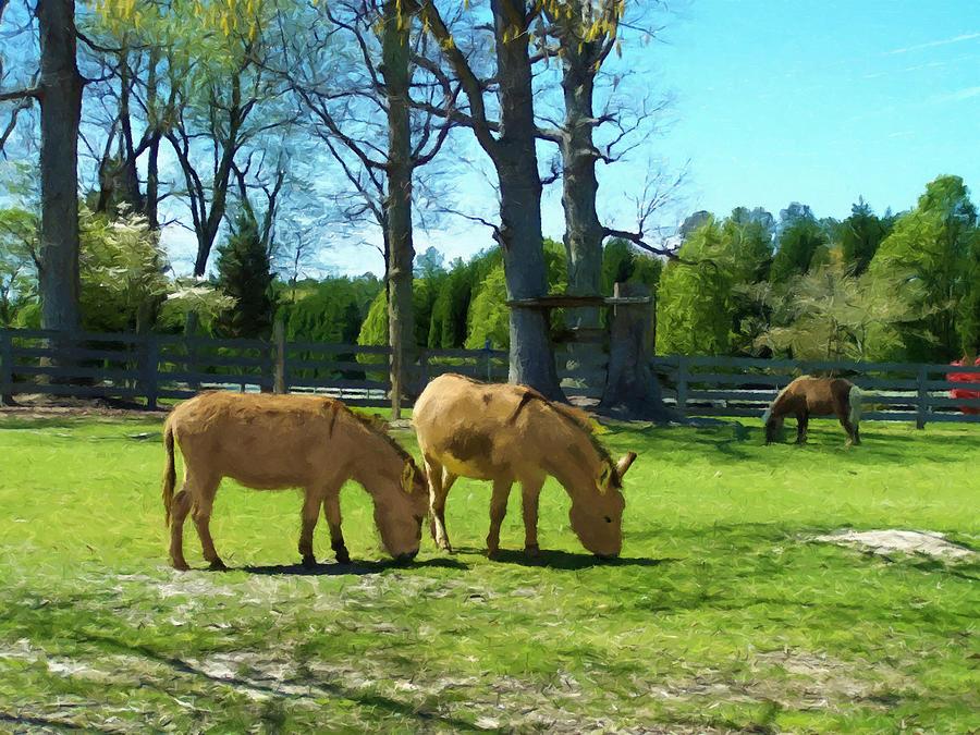 Grazing Donkeys And Pony by Sandi OReilly