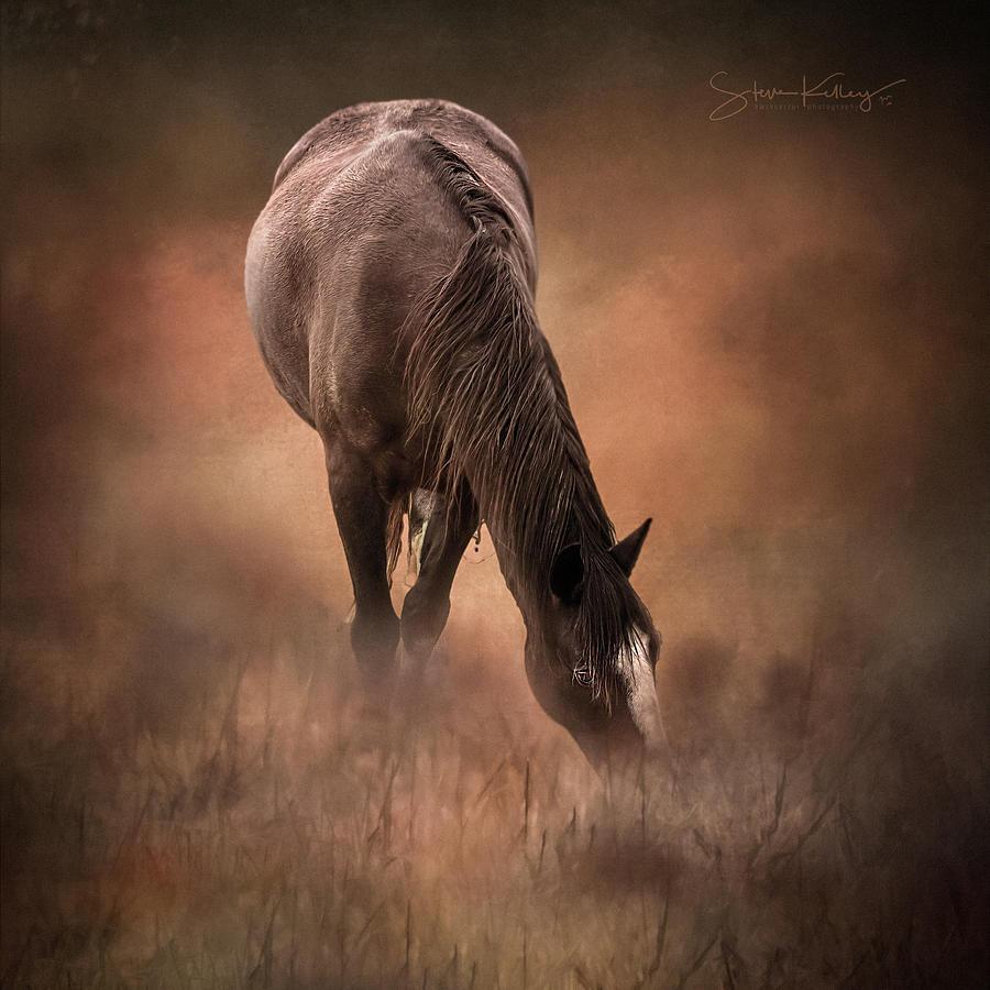 Grazing Horse by Steve Kelley