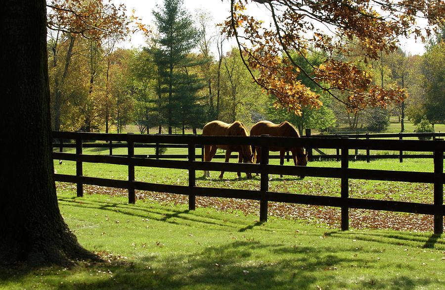 Grazing In Autumn Photograph by Cgbaldauf