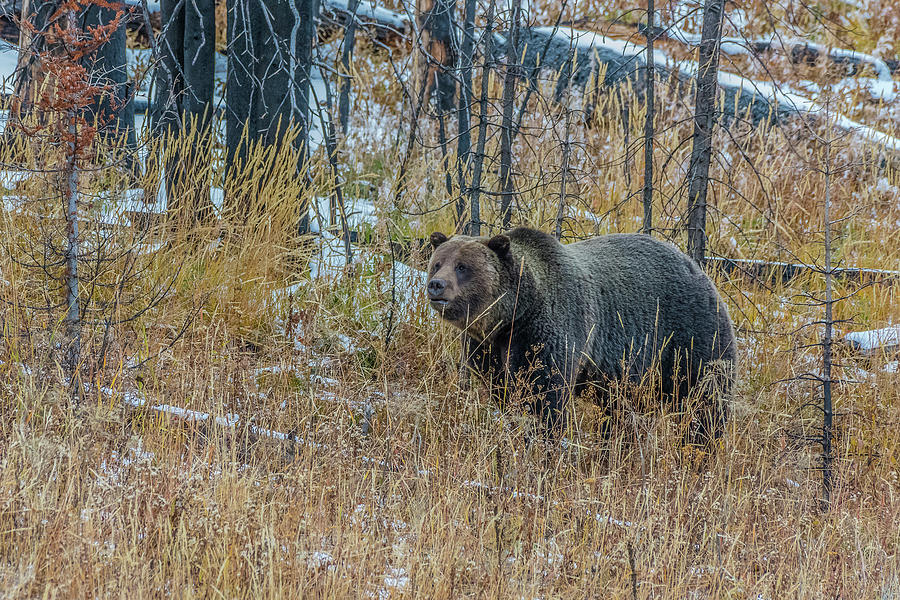 Grazing In The Forests Of Wyoming by Yeates Photography