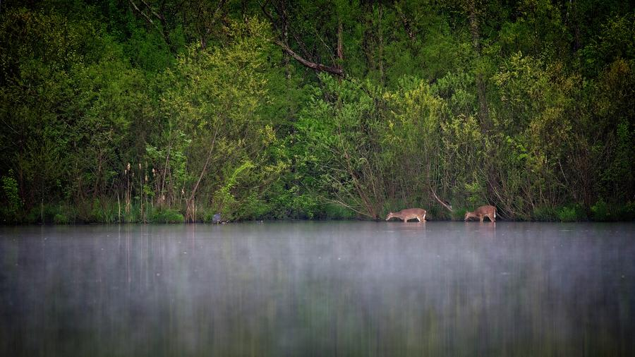 Grazing In The Lake by John Benedict