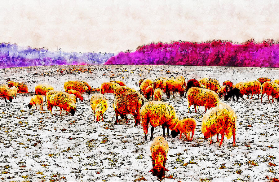 Grazing Sheep watercolor drawing by Hasan Ahmed