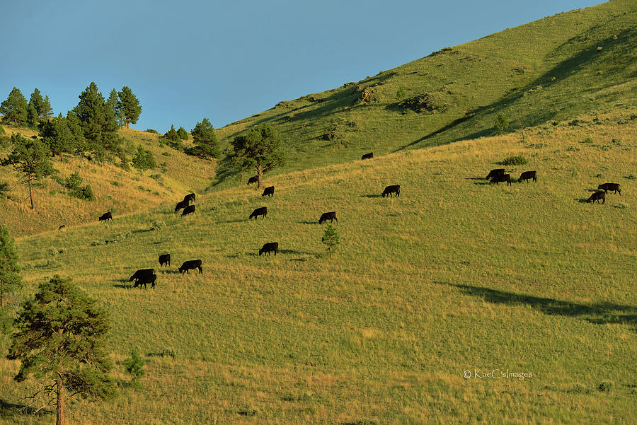 Grazing the Hills by Kae Cheatham