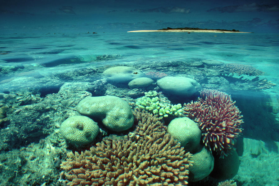 Great Barrier Reef In The Foreground Photograph by Auscape / Uig