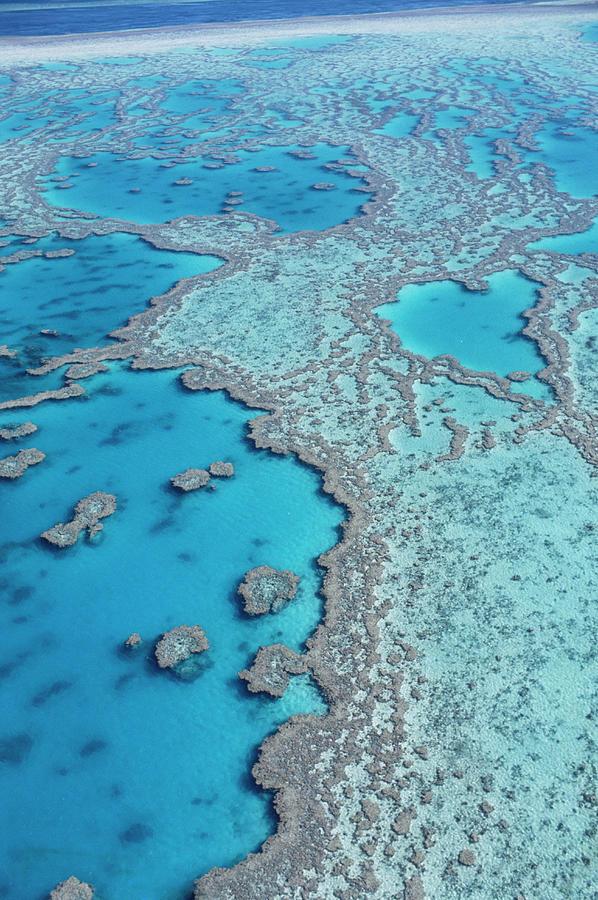 Great Barrier Reef Photograph by John W Banagan