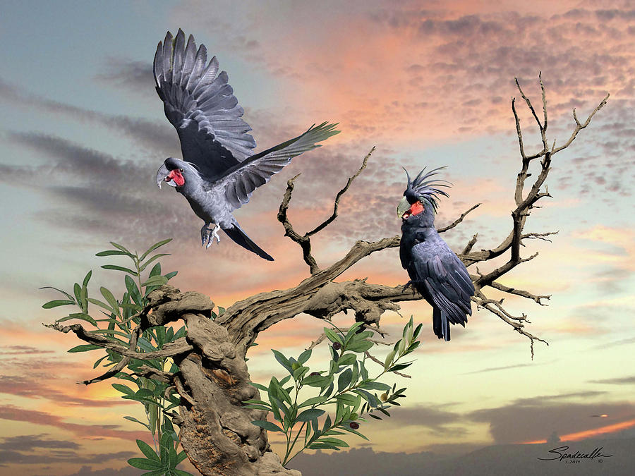 Great Black Cockatoo Pair by Spadecaller