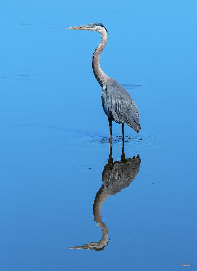 Great Blue Heron DMSB0166 by Gerry Gantt