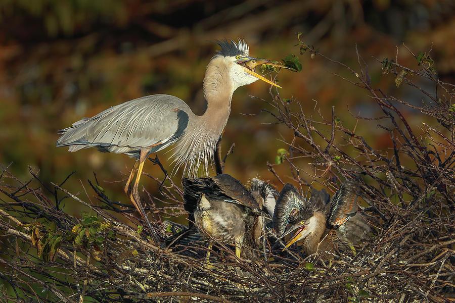 Great Blue Heron Serving Breakfast by Juergen Roth