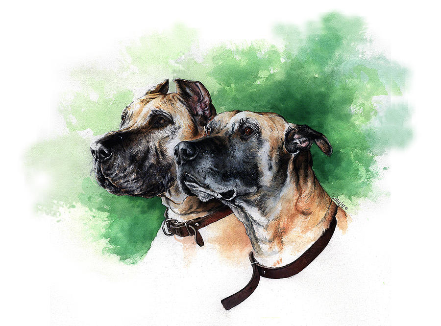 Great Danes by Patrice Clarkson