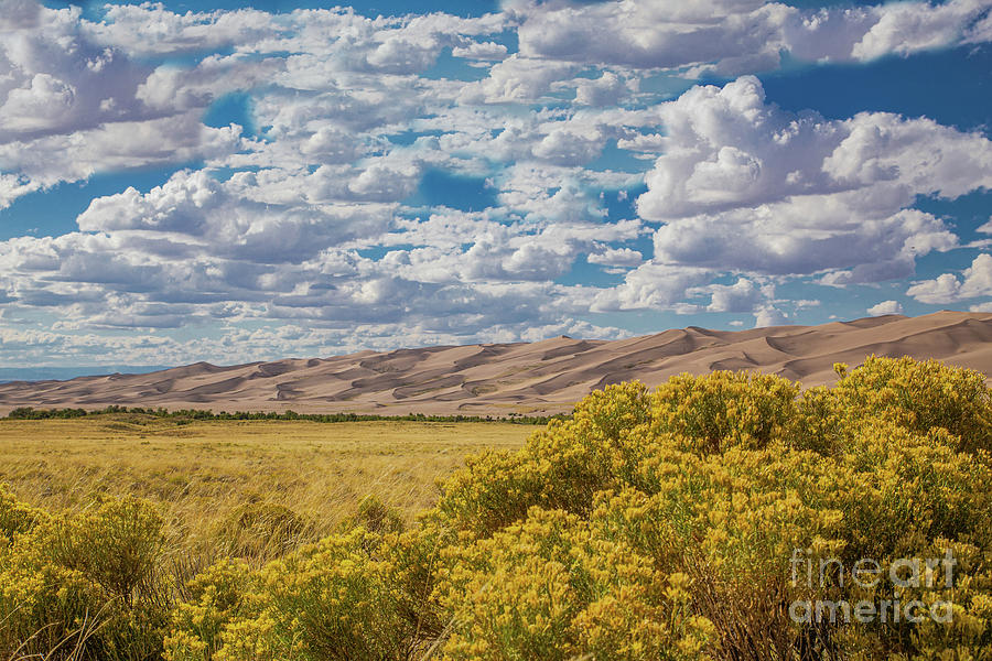 Distant Dunes by Lynn Sprowl