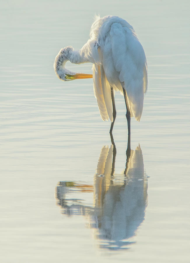 Great Egret 6692-081819 by Tam Ryan