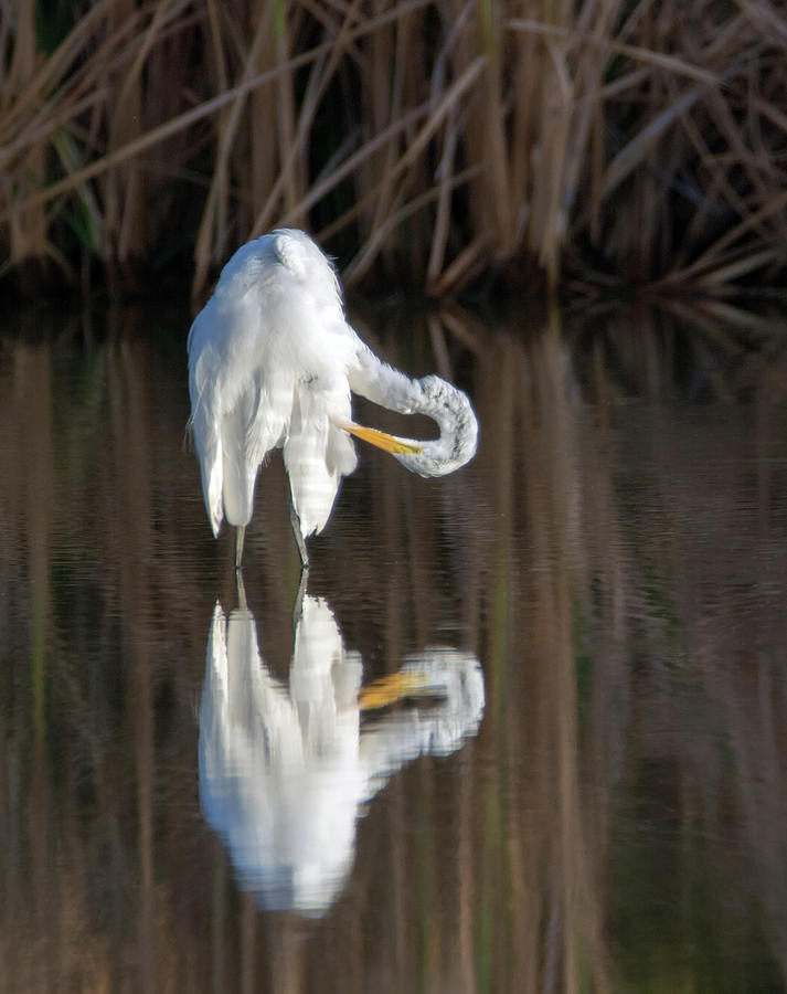 Great Egret 6698-081819 by Tam Ryan
