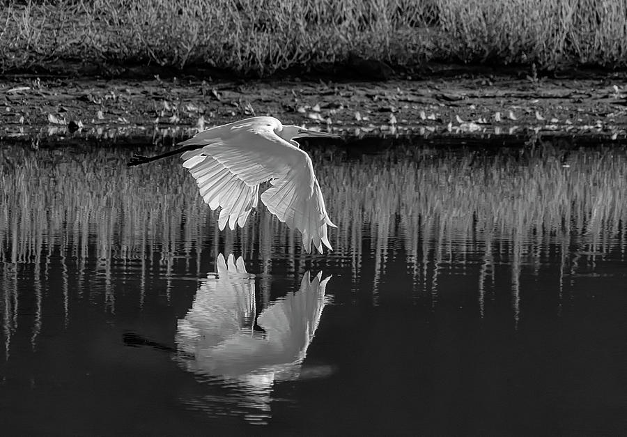 Great Egret BW by Rick Mosher