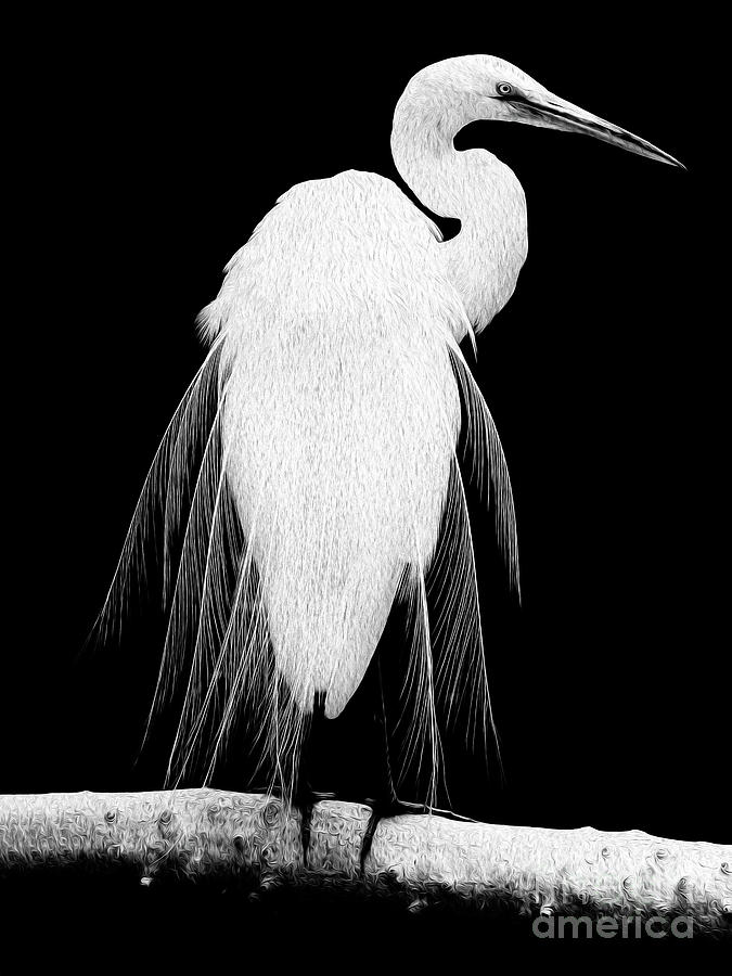 Great Egret In Full Bloom I - L Digital Art by Kenneth Montgomery