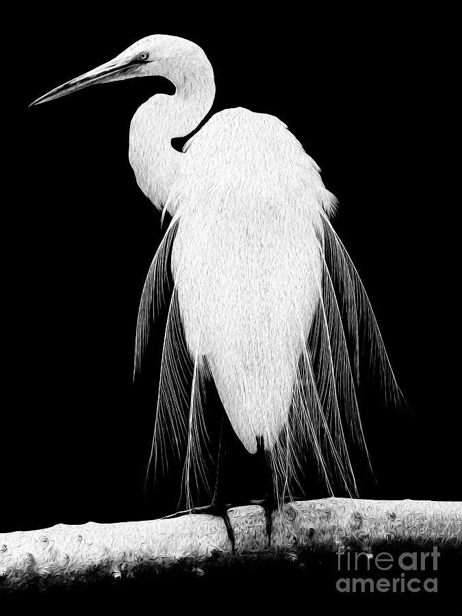 Great Egret In Full Bloom I - R Digital Art by Kenneth Montgomery