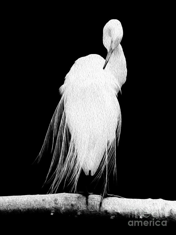 Great Egret In Full Bloom II Digital Art by Kenneth Montgomery