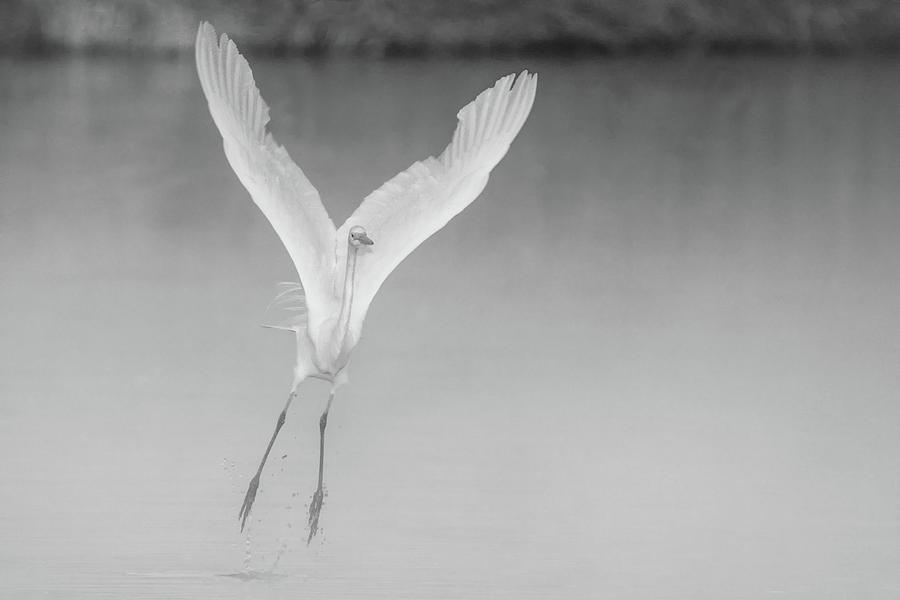 Great Egret in the Mist 2023-012118-2 bw by Tam Ryan