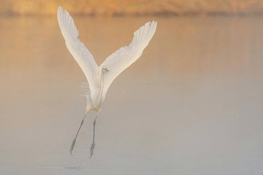 Great Egret in the Mist 2023-012118 by Tam Ryan