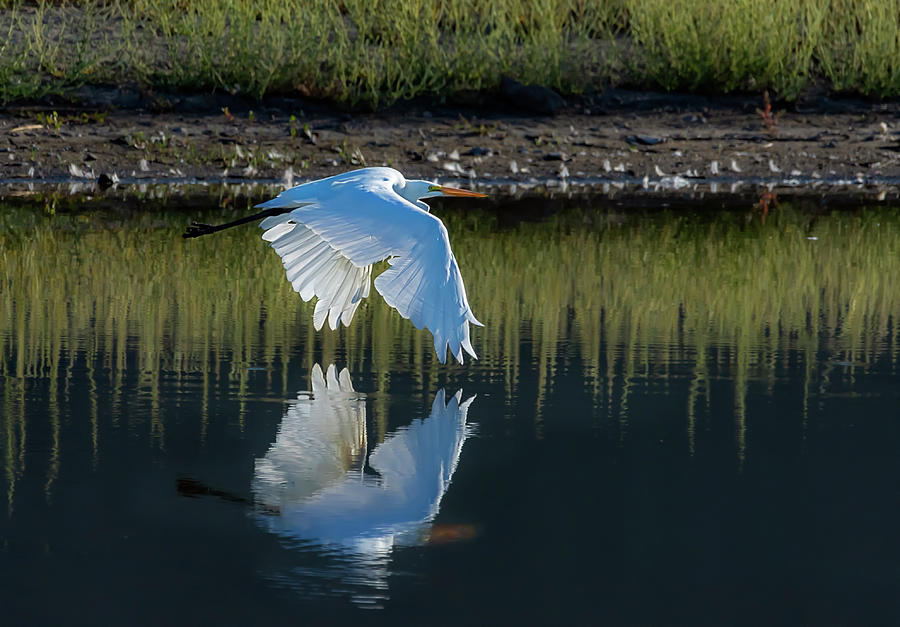 Great Egret by Rick Mosher