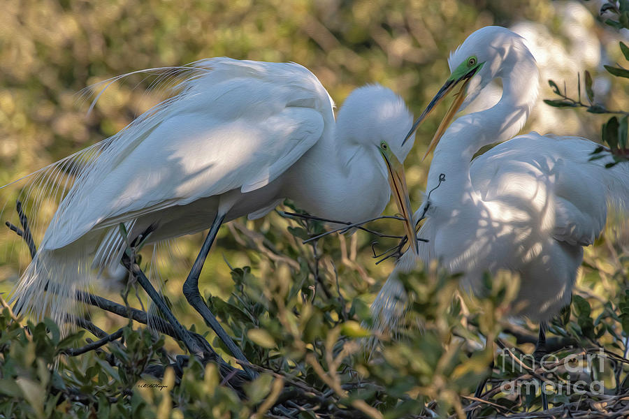 Egrets Mixed Media - Great Egrets Precious Moment by DBHayes