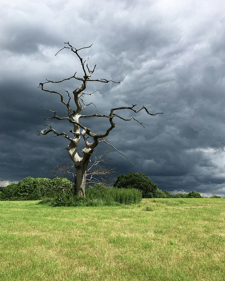 Great Gregories - Epping Forest Photograph
