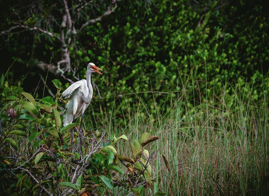 Great Heron by Nisah Cheatham