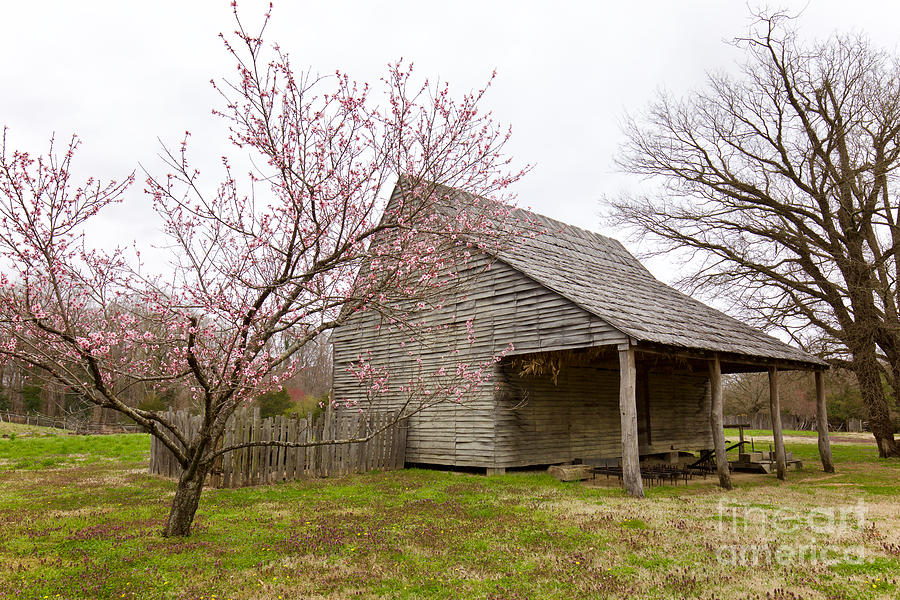 Spring Blossoms at Great Hopes Plantation by Rachel Morrison