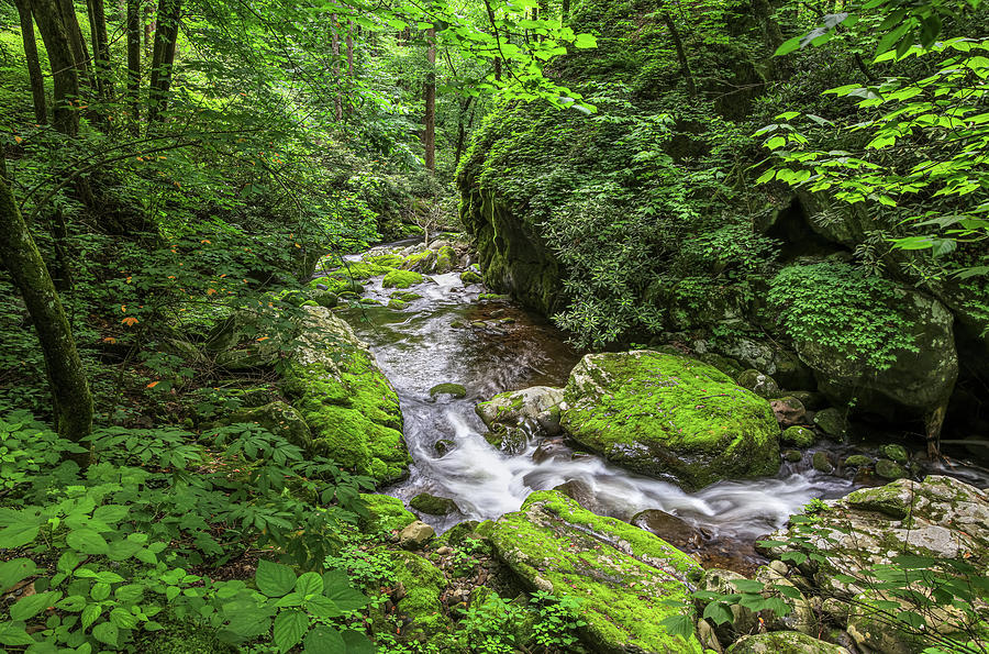 Great Smoky Mountains Creek by Carl Amoth