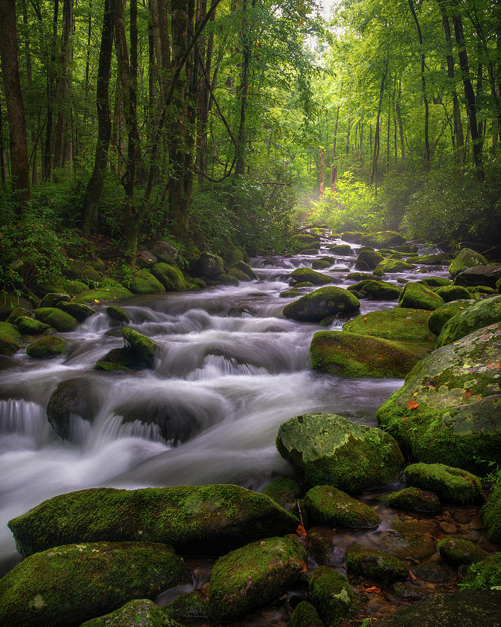 Great Smoky Mountains Gatlinburg Tennessee by Mike Koenig