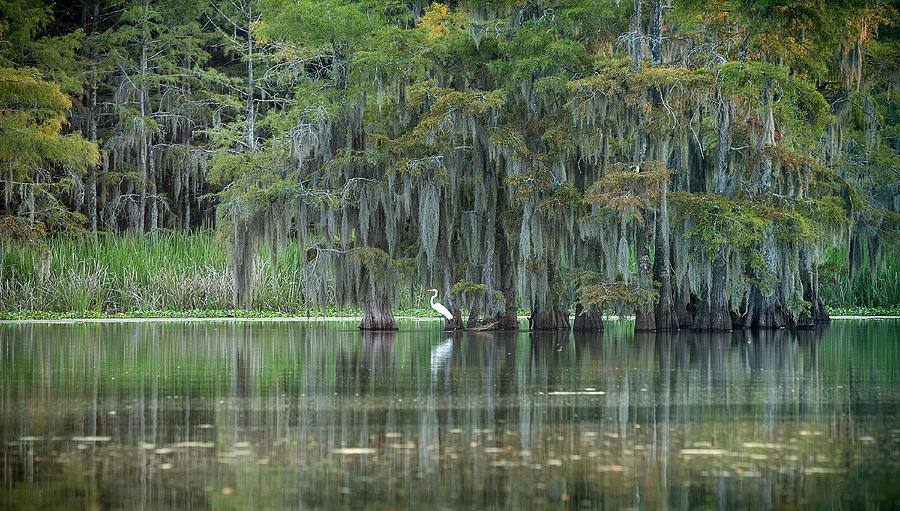 Great White Heron on Concordia Lake by SL Ernst