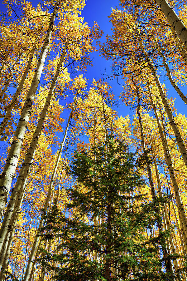Green and Gold by Tim Stanley