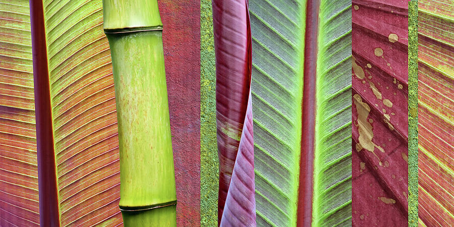 Natural Photograph - Green And Red Leaf Collage by Cora Niele