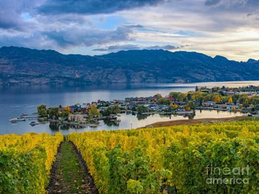 Green Bay Over The Vineyards by Rod Jellison