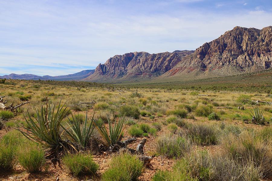 Green Desert by Sagittarius Viking