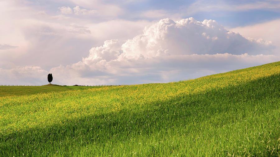 Green fields by Yuri San