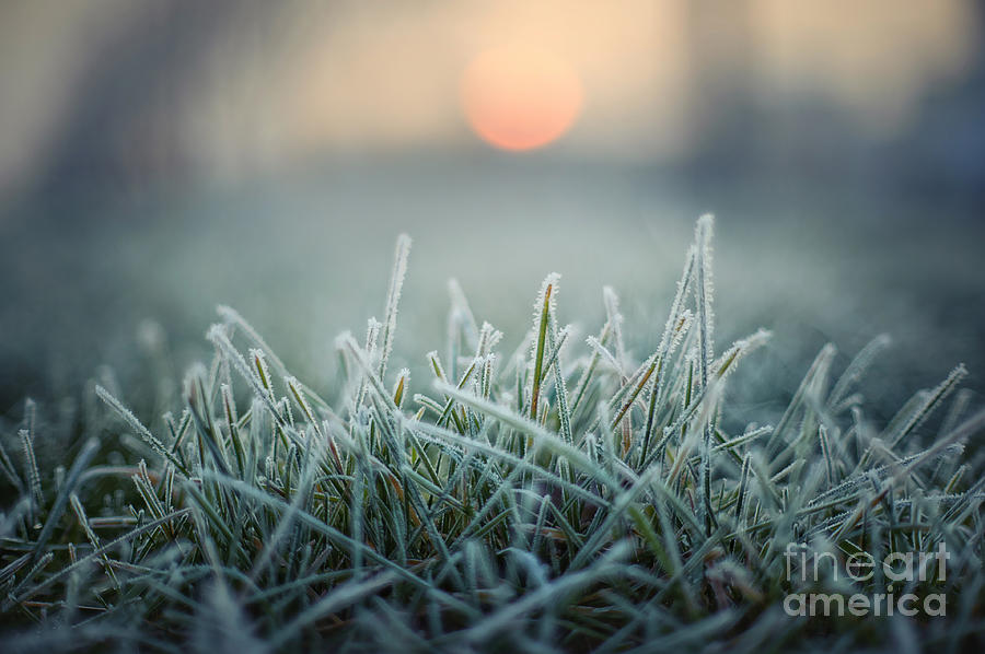 Gift Photograph - Green Grass With Morning Frost And Red by Chromakey
