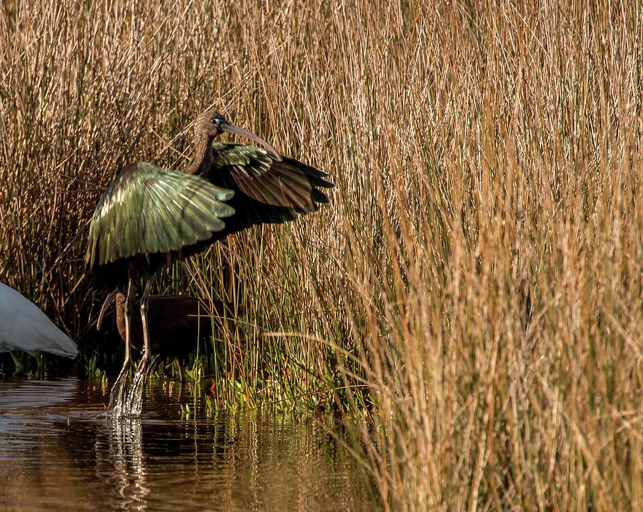 Green Ibis by Dorothy Cunningham