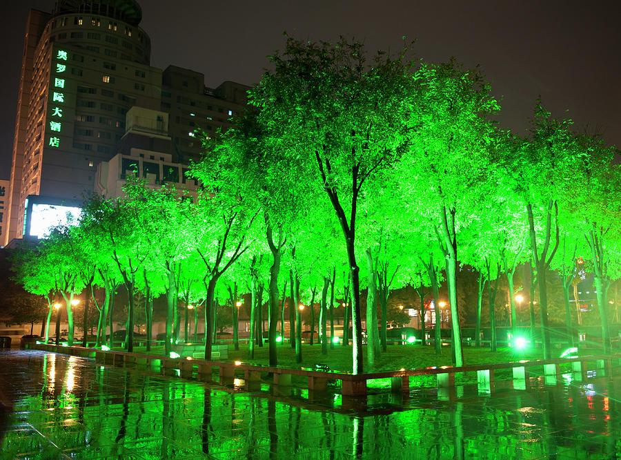 Green Illuminated Trees, China Photograph by Shanna Baker