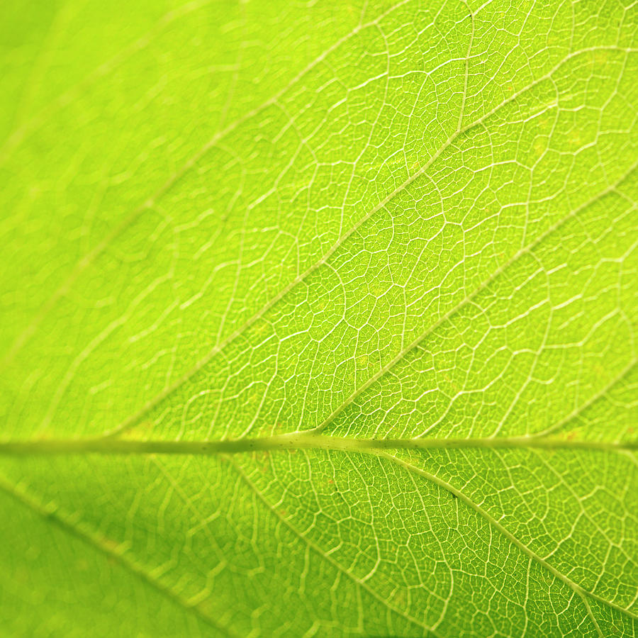 Green Leaf As Background Photograph by Pixedeli