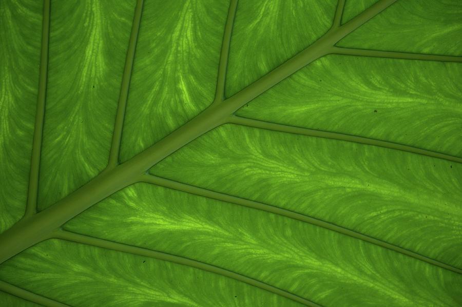 Green Leaf Markings i by Helen Northcott