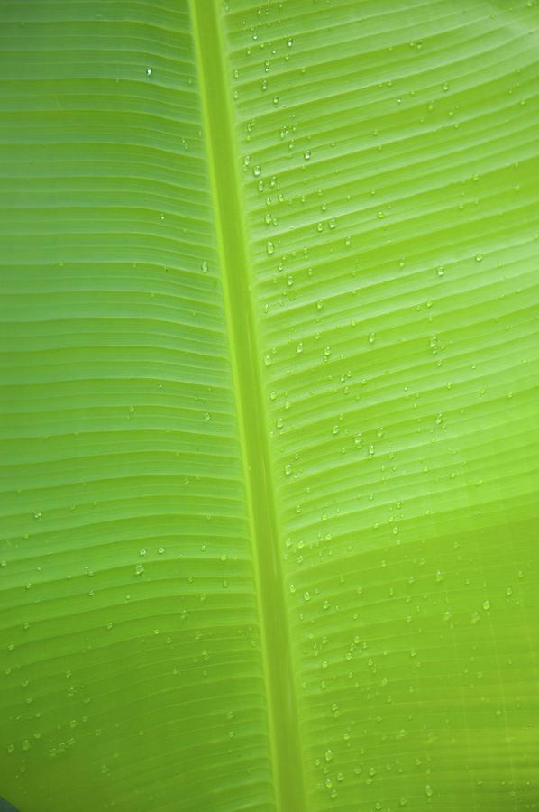 Green Leaf Markings ii by Helen Northcott