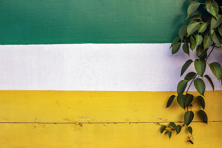 Green Leaves and Negative Space by Prakash Ghai
