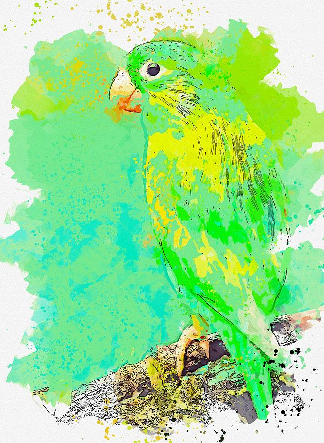 Green Macaw -  Watercolor By Ahmet Asar Painting