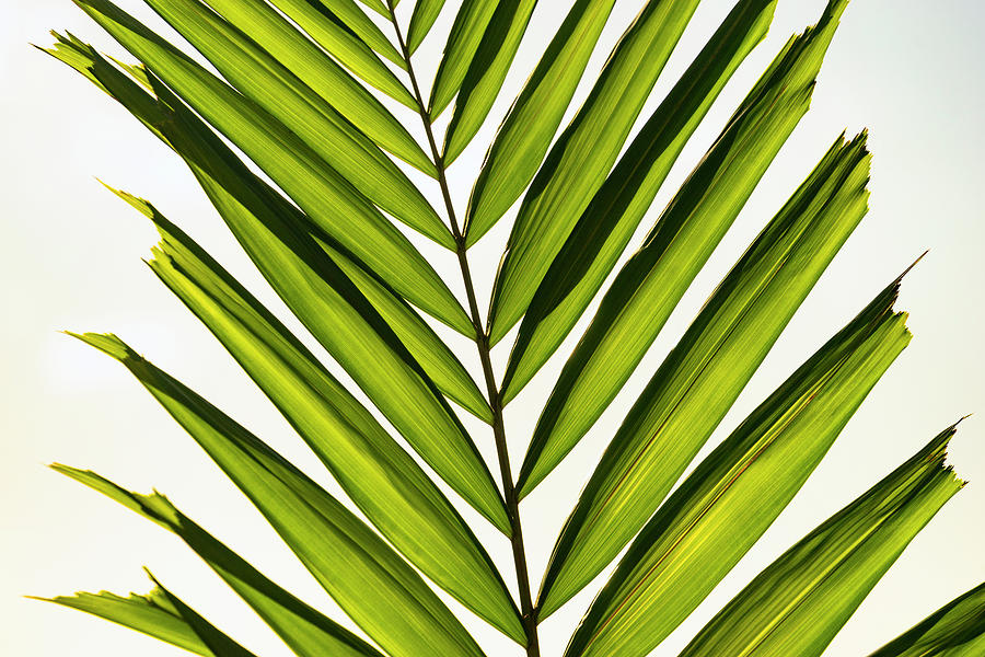 Green Palm by Christopher Johnson