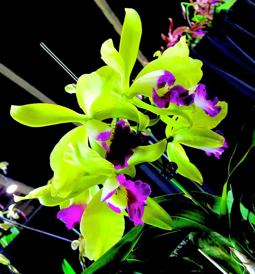 Green Purple Orchid Aloha  by Joalene Young